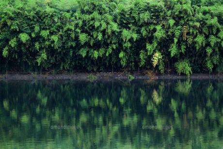 水辺に茂る豊かな草木が水面に映る風景の写真素材 [FYI01212713]