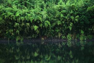 水辺に茂る豊かな草木が水面に映る風景の写真素材 [FYI01212716]