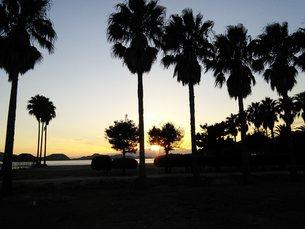 うさぎ島の写真素材 [FYI01212739]