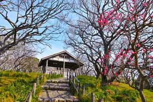 田浦梅林の風景の写真素材 [FYI01212767]