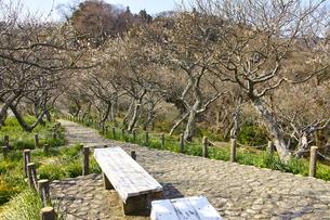 田浦梅林の風景の写真素材 [FYI01212768]