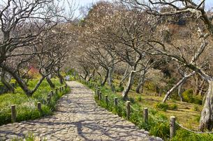田浦梅林の風景の写真素材 [FYI01212769]