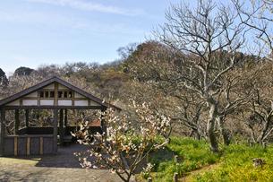 田浦梅林の風景の写真素材 [FYI01212770]