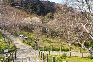 田浦梅林の風景の写真素材 [FYI01212771]