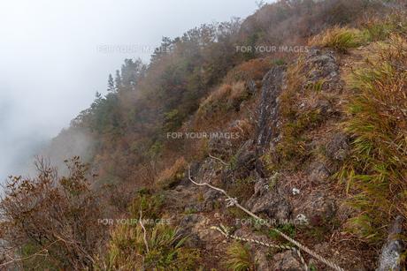 霧の登山道を行くの写真素材 [FYI01212859]
