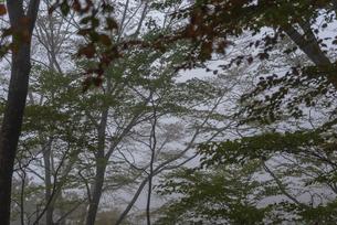 霧の森の中の写真素材 [FYI01212864]