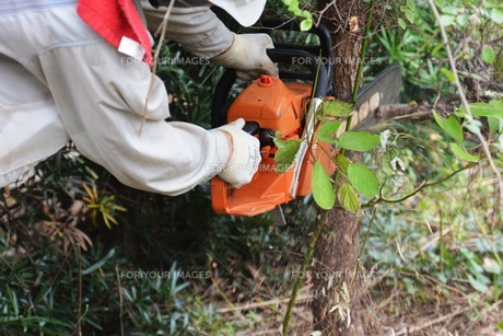 宅地造成のための樹木伐採作業の写真素材 [FYI01212923]