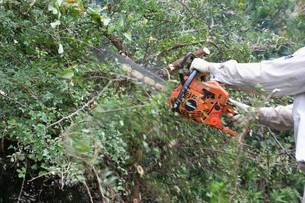 宅地造成のための樹木伐採作業の写真素材 [FYI01212924]