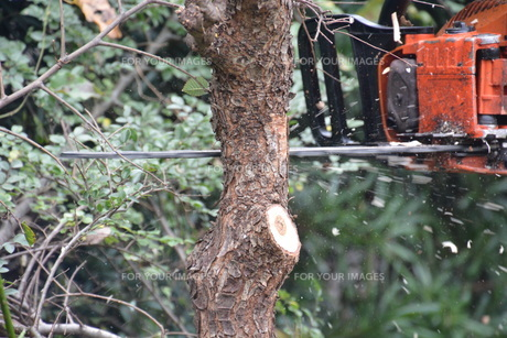宅地造成のための樹木伐採作業の写真素材 [FYI01212925]
