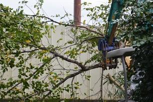 宅地造成のための樹木伐採作業の写真素材 [FYI01212927]