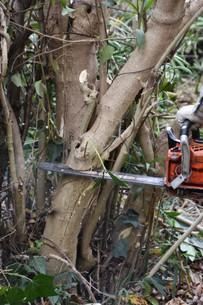 宅地造成のための樹木伐採作業の写真素材 [FYI01212928]
