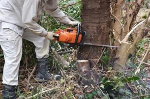 宅地造成のための樹木伐採作業の写真素材 [FYI01212929]