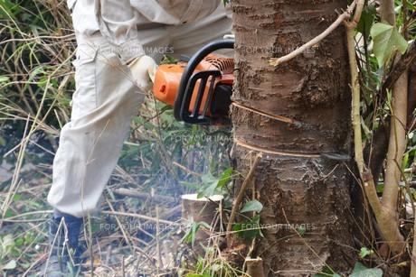 宅地造成のための樹木伐採作業の写真素材 [FYI01212930]