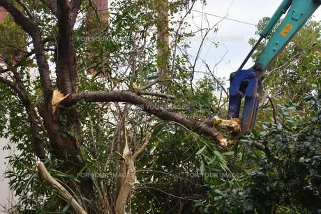 宅地造成のための樹木伐採作業の写真素材 [FYI01212936]