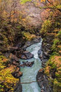 2017年秋の吾妻渓谷の風景の写真素材 [FYI01212988]
