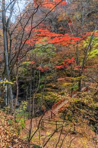 2017年秋の吾妻渓谷の風景の写真素材 [FYI01212990]