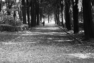 秋の公園の光景の写真素材 [FYI01213080]