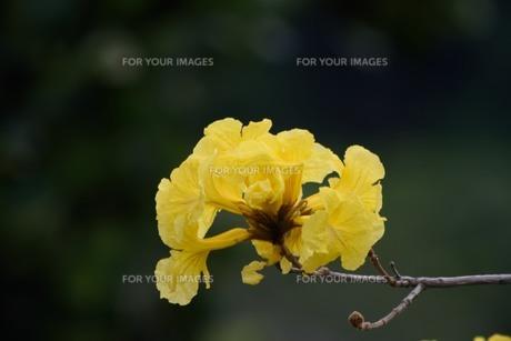 いっぺいの花の写真素材 [FYI01213301]