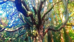 木の写真素材 [FYI01213461]