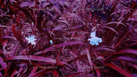 花の写真素材 [FYI01213464]