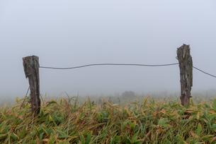 霧の登山道の行き止まりの写真素材 [FYI01213471]