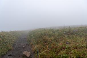 霧の登山道をゆくの写真素材 [FYI01213472]