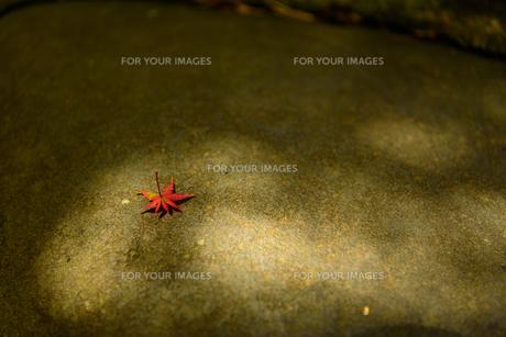 秋の気配の写真素材 [FYI01213477]