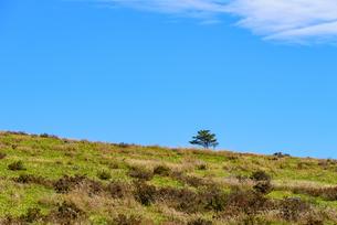 稜線の木の写真素材 [FYI01213499]