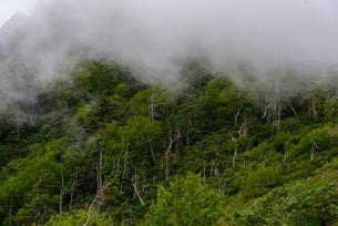 雲のかかる樹林帯の写真素材 [FYI01213511]