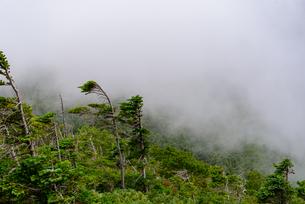 雲の中の樹林帯の写真素材 [FYI01213512]