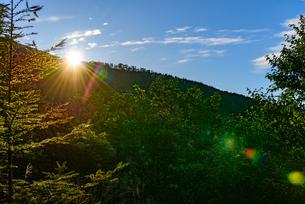 樹林帯登山道から眺める日の出の写真素材 [FYI01213514]