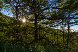 朝日の当たる樹林帯登山道の写真素材 [FYI01213515]