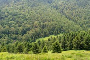森林に向かうの写真素材 [FYI01213553]