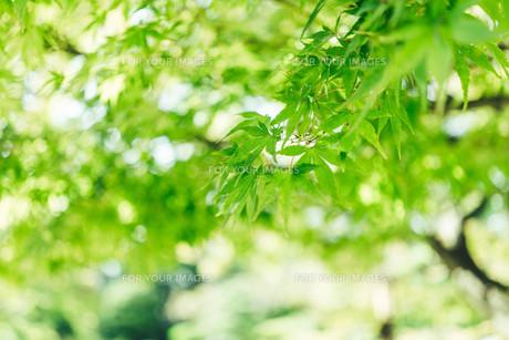 緑のイメージの写真素材 [FYI01213741]