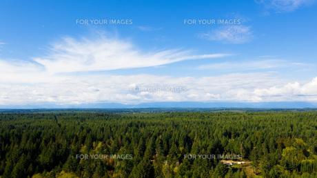 森林広がるの写真素材 [FYI01213831]