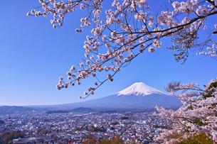 新倉山ハイキングコースから見る満開の桜と富士山の写真素材 [FYI01214042]