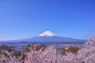 新倉山ハイキングコースから見る満開の桜と富士山の写真素材 [FYI01214047]