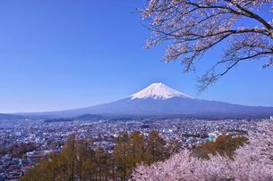 新倉山ハイキングコースから見る満開の桜と富士山の写真素材 [FYI01214048]