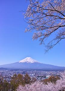 新倉山ハイキングコースから見る満開の桜と富士山の写真素材 [FYI01214049]
