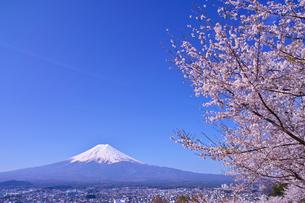 新倉山ハイキングコースから見る満開の桜と富士山の写真素材 [FYI01214050]