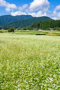 白い蕎麦の花と赤い彼岸花が咲く初秋の里山の写真素材 [FYI01214134]
