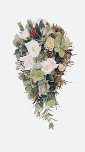 花の写真素材 [FYI01214137]