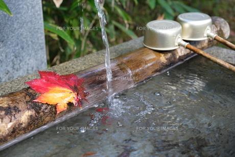 手水舎と楓の写真素材 [FYI01214220]