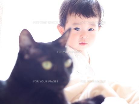 赤ちゃんと猫の写真素材 [FYI01214288]