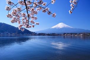 河口湖北岸の産屋ヶ崎から見る満開の桜と富士山の写真素材 [FYI01214456]