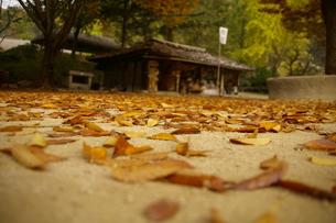 落ち葉の写真素材 [FYI01214809]