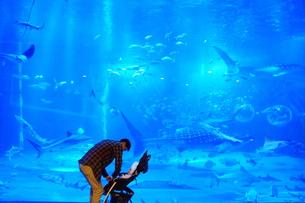大水槽の水族館でジンベイザメとの写真素材 [FYI01214883]