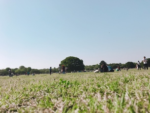昭和記念公園の写真素材 [FYI01214909]