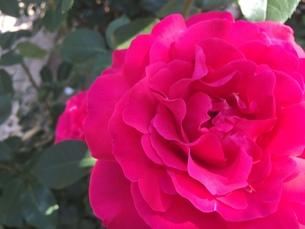 お花畑の写真素材 [FYI01215068]