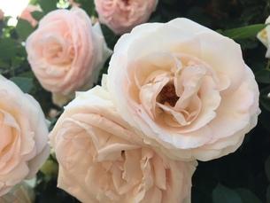 お花畑の写真素材 [FYI01215069]